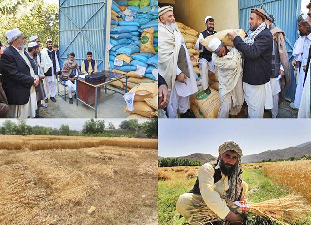 Emergency support to improve the food security of farming affected by high food prices and drought in Afghanistan