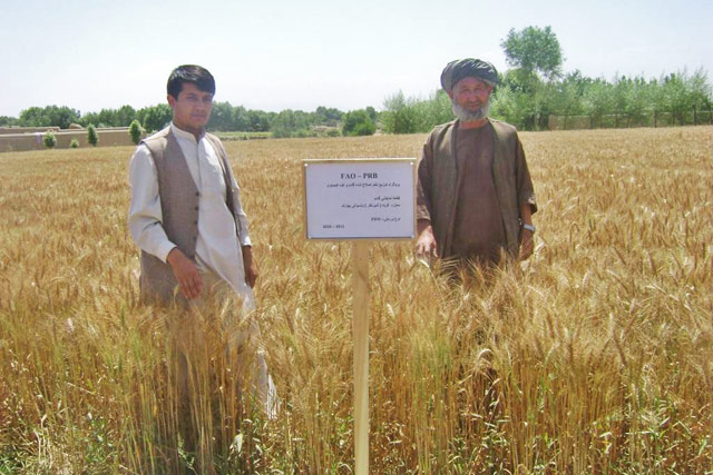 Programme for the Increase of Agricultural Production by the Improvement of Productivity in the Islamic Republic of Afghanistan