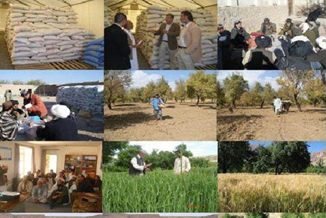 Support to 12 050 vulnerable households affected by high food prices and the drought crisis in Afghanistan