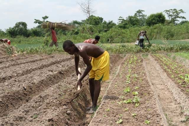 Livelihoods resilience opportunities for conflict-affected rural communities in the Central African Republic