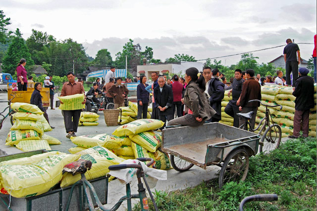 Agricultural rehabilitation in earthquake-affected China
