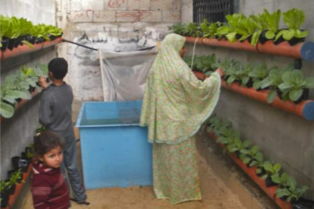 Emergency food production support to poor families in the West Bank & Gaza Strip