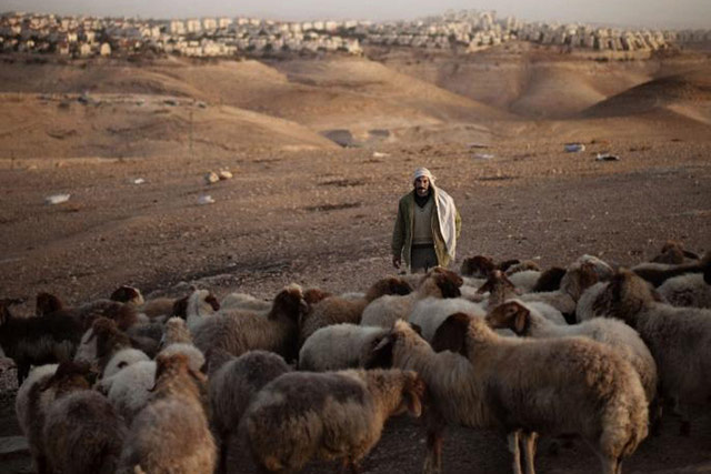 Emergency support to small ruminant herders and vulnerable farming households in the West Bank and Gaza Strip