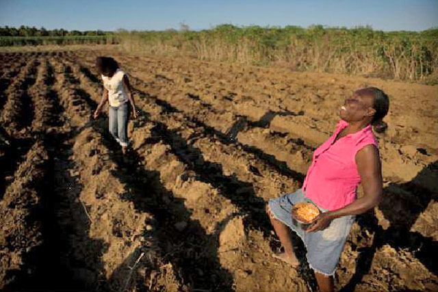 Immediate support to agricultural production and food security of earthquake-affected families following the 2010 earthquake in Haiti