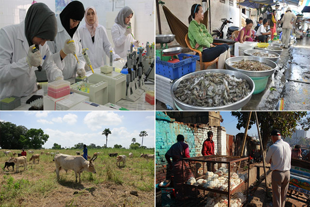 Establishment and Operation of an FAO/OIE Crisis Management Centre for Highly Pathogenic Avian Influenza and other transboundary animal diseases