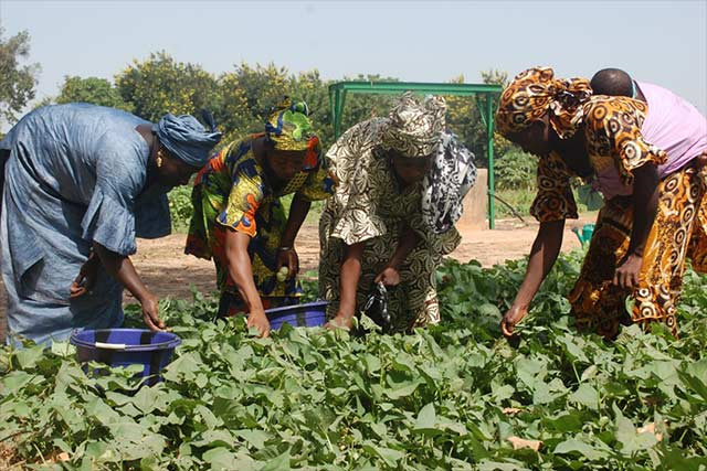 Support for rural women's economic empowerment in Mali