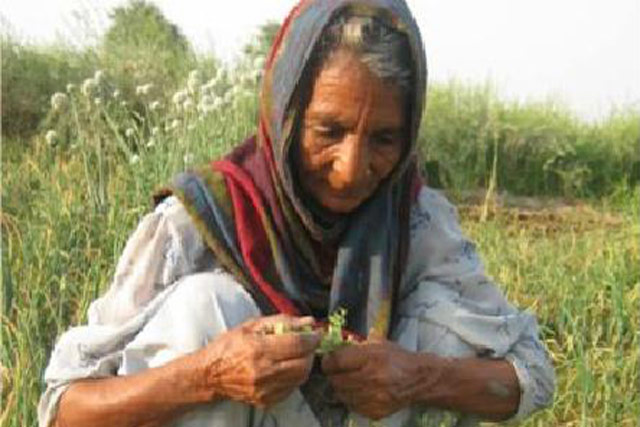 Support to restore food security and agriculture-based livelihoods of crisis-affected rural households in Pakistan