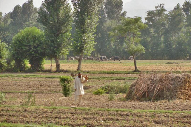 Rapid restoration of agriculture-based livelihoods in Pakistan