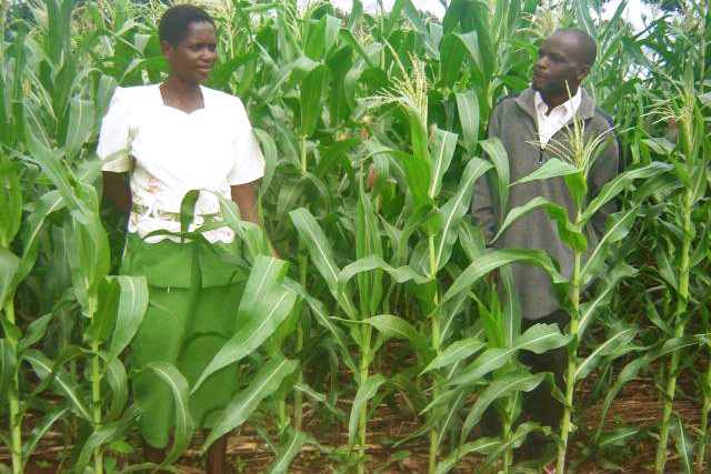 Conservation agriculture coordination and advocacy in southern Africa