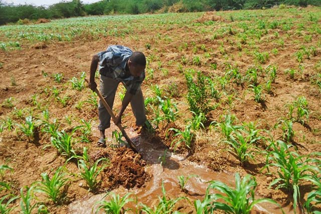 FAO Resilience Programme in Somalia