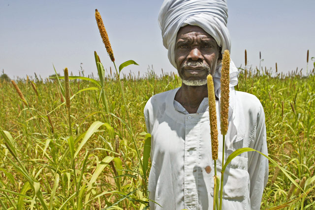 Restoration of food security and livelihoods of vulnerable households in Sudan