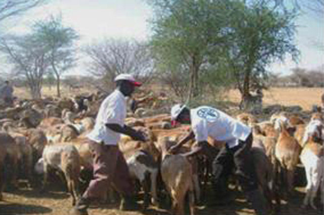 Support to coordination of Food Security and Livelihoods Sector in Sudan