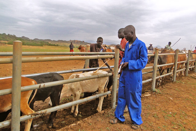 Livelihoods support for pastoralists and agropastoralists in Uganda