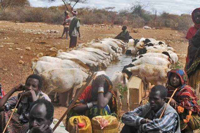 Safeguarding the livelihoods of pastoralist and agropastoralist communities in Ethiopia