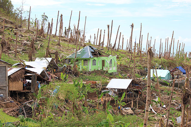 Some 33 million coconut trees were damaged or destroyed by Typhoon Haiyan in Eastern Visayas