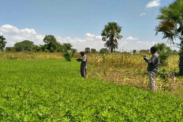 Strengthening agriculture and food security information in South Sudan