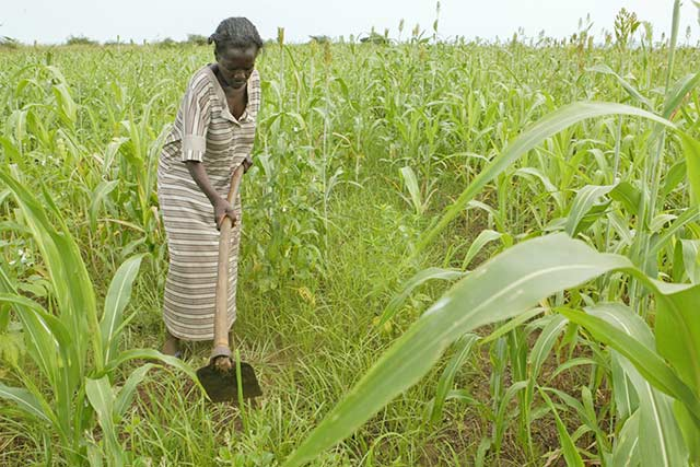 Japan supports efforts to contain Fall Armyworm in South Sudan