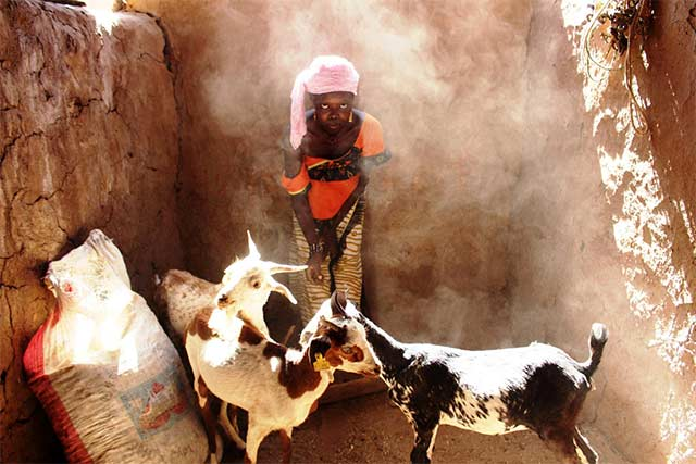 Sweden supports drought-stricken farmers and herders in the Sahel