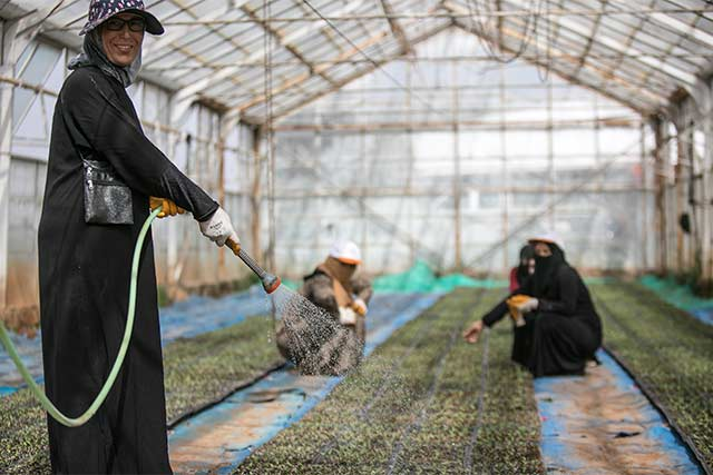 FAO and EU enhance smallholder farmers' capabilities to transform the agriculture sector in the Syrian Arab Republic