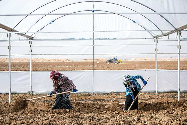 Erratic weather and prolonged conflict take toll on the Syrian Arab Republic's agricultural output