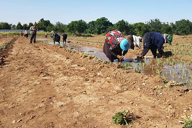 FAO supports Syrians to increase their crop production by restoring access to water