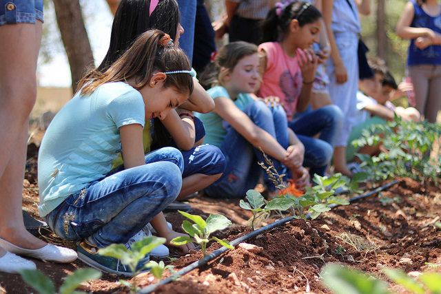 Promoting food and nutrition education through school gardens in Syria