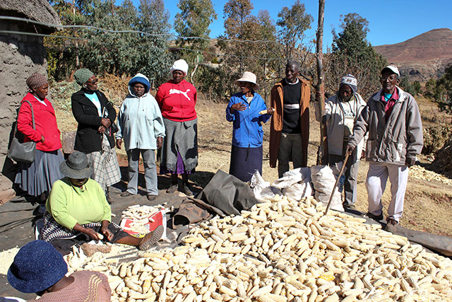Conservation Agriculture explained by farmers to farmers in Lesotho
