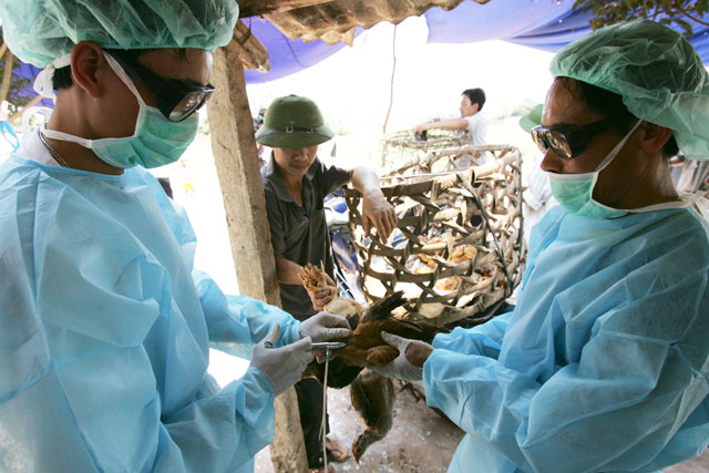 Stamping out H5N1 avian influenza could take decades