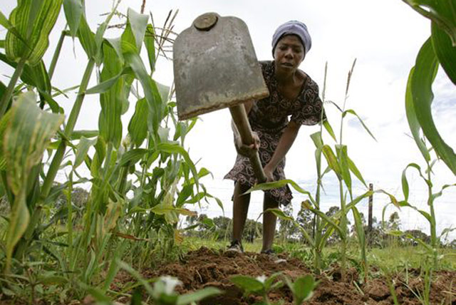 Zimbabwe: higher production but food insecurity persists