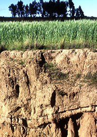 Sustainable Land Soil And Water Management Will Play A Growing Role In Ending And Reversing Land Degradation And Increasing Food Production