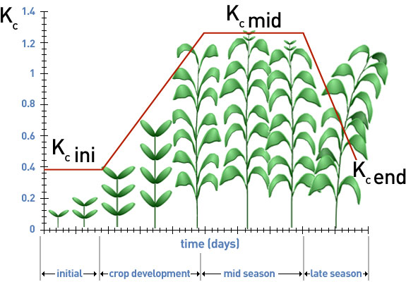 stages of  development  plant