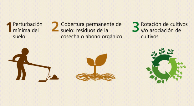 5 cosas sobre Agricultura de Conservación