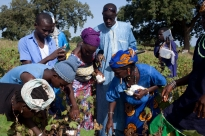Assessing the Quality of Farmer Field School Programmes
