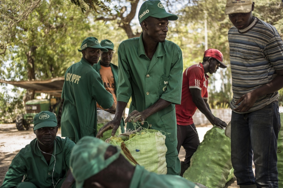 Senegal: A rural youth employment policy champion