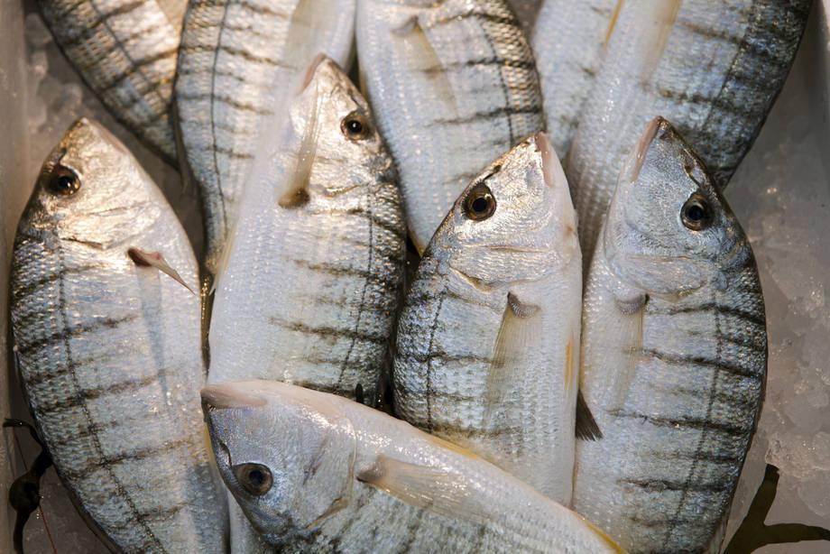 Le magasin la pêche dhiver à tomske