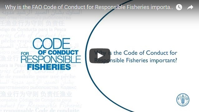 the role of population size in many fisheries management decisions King mackerel population and the fisheries it supports the process resulted in a  and increased minimum size by  role in management decisions constitutes a new.
