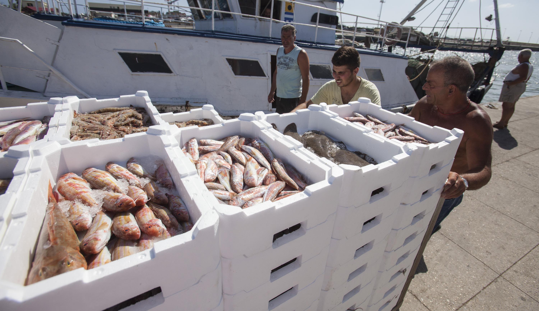 World Fish Market at a Glance  GLOBEFISH  Food and ...