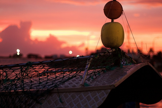 Global seafood trade expansion slows despite continuing production growth'