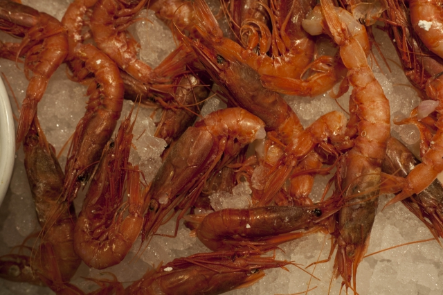 Moderate and positive production trends for farmed shrimp'