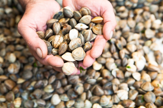 Prices of bivalves sky high'