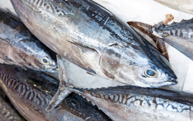Frozen skipjack prices grow and remain high'