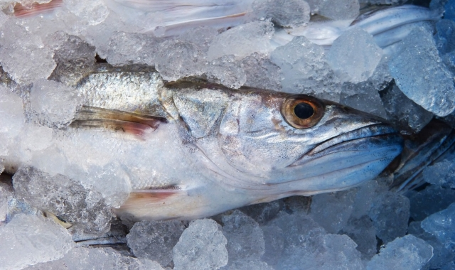 Groundfish: tighter supplies and higher prices '