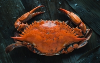 Crab | GLOBEFISH - Information and Analysis on World Fish
