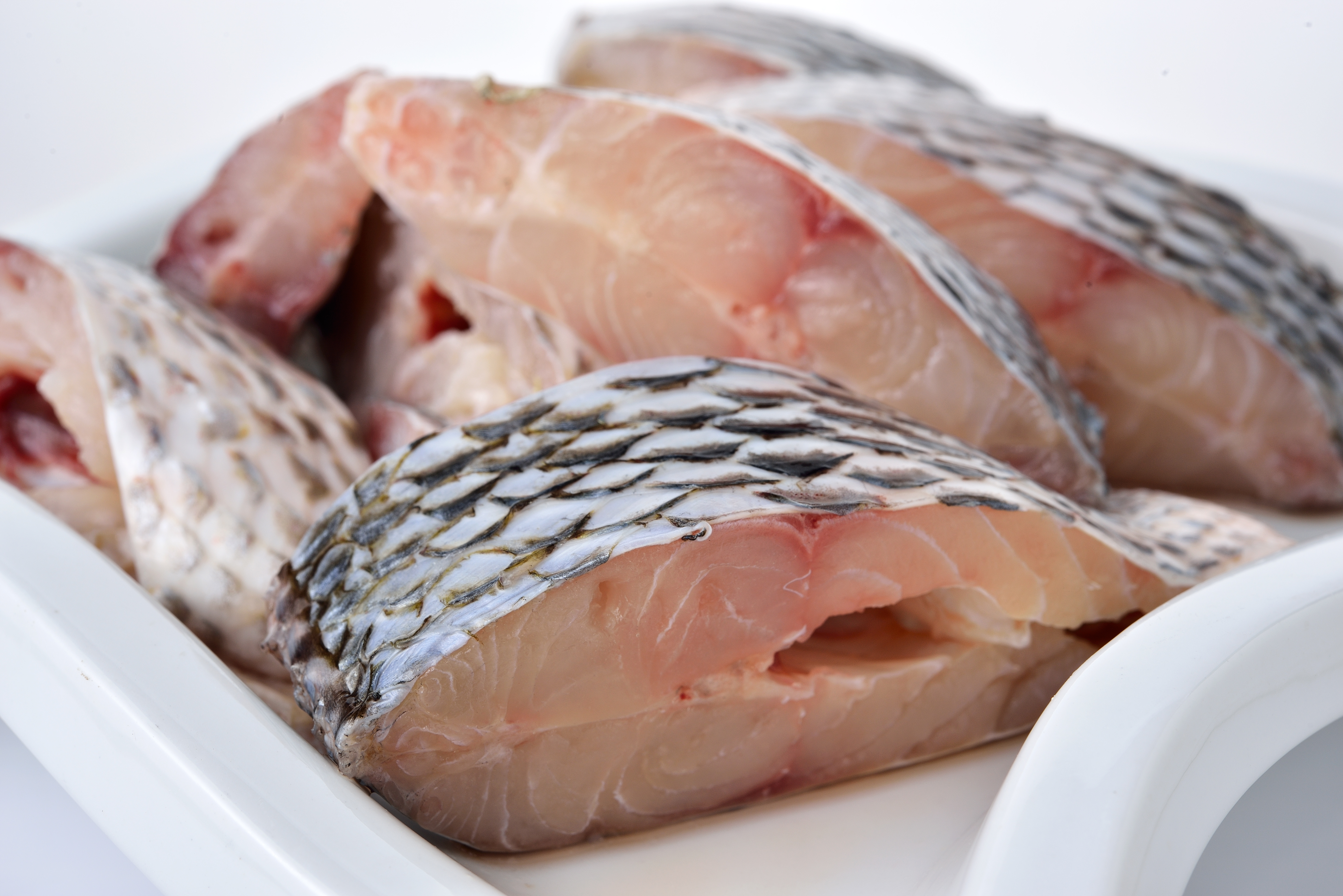 Tilapia december 2015 globefish food and agriculture for What is tilapia fish