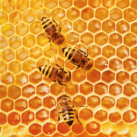 TZH 45: It's not just about the honey