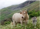 Mountain pastures and livestock farming facing uncertainty: environmental, technical and socio-economic challenges