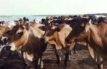 Le défi environnemental est à relever aussi dans le secteur laitier