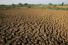 C'est la désolation dans les verts pâturages d'autrefois au Niger