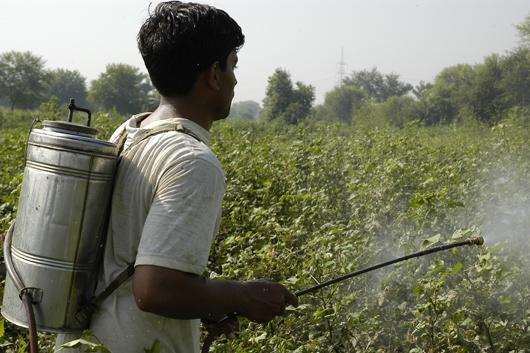 Retiro de plaguicidas peligrosos, base de una alimentación sana: Sader