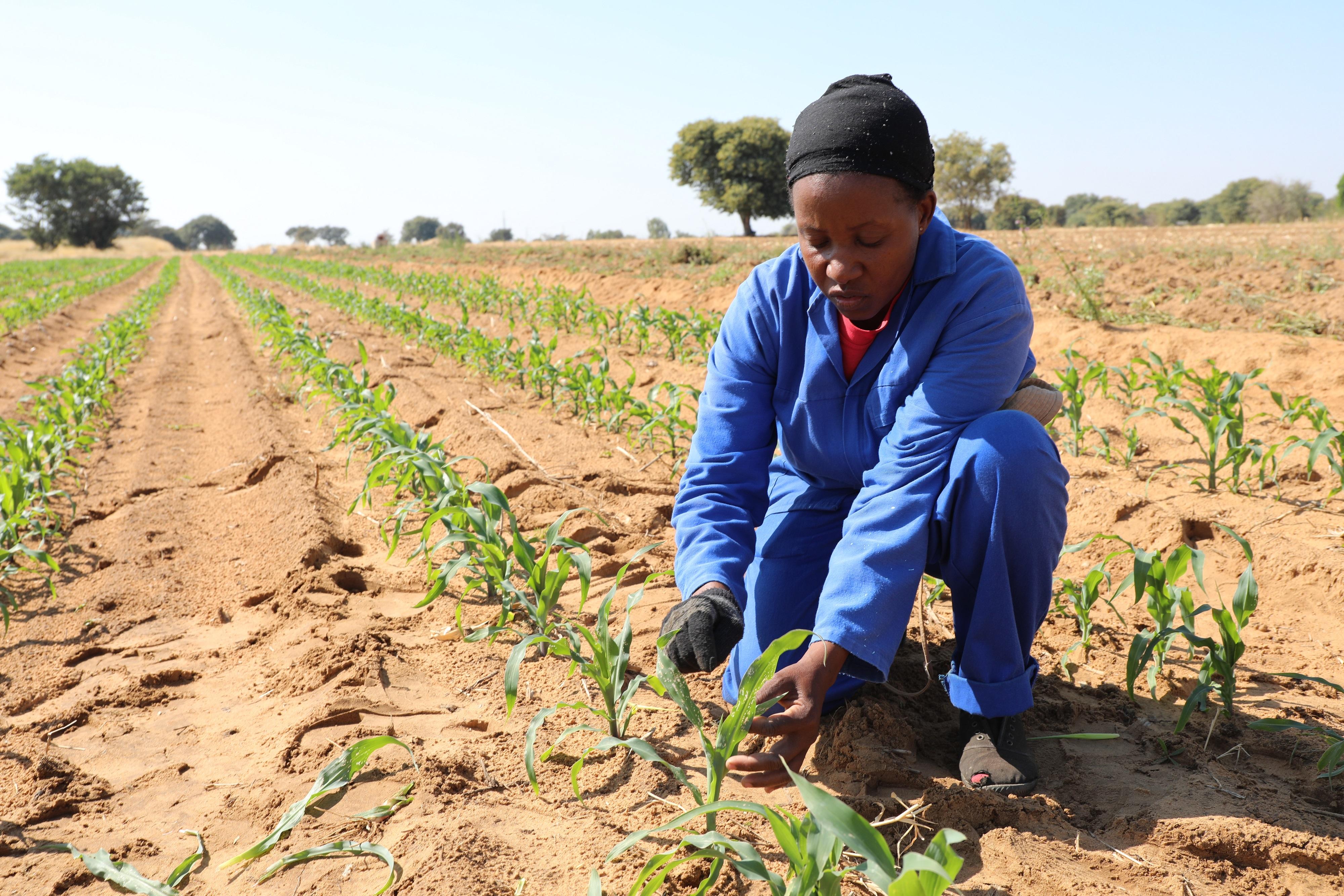 afrique emploi cadre agriculture